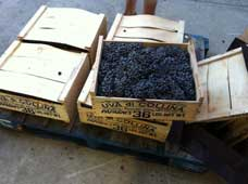 West Coast Grapes 2012 boxes
