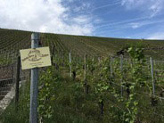 vineyards are planted on very steep slopes