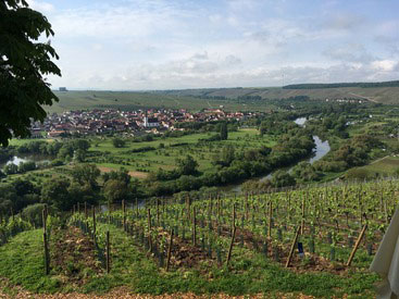 Escherndorf wine region in Franconia