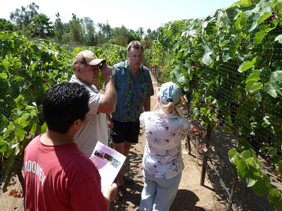 Hands on winemaking class vineyard visit