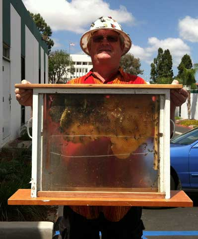 Don and his bees